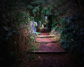 Secret Garden Irish Photography Fantasy Path Nature Green Purple Home Decor Print