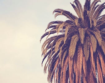 ESCAPE - Photographic Print - Palm Tree, Los Angeles, California, Bohemian, cream, boho, decorating, travel, Vintage, Wall, Decor, Hanging,