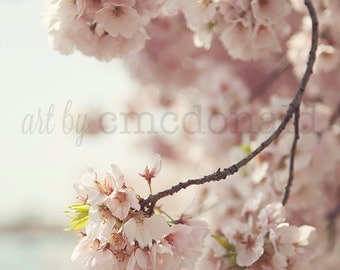 Jubilant  - Photographic Print - Pink, Cherry Blossom, Spring, Washington, D.C., Romantic, Cottage, Shabby, Home, Decor, Wall, Chic, Hanging