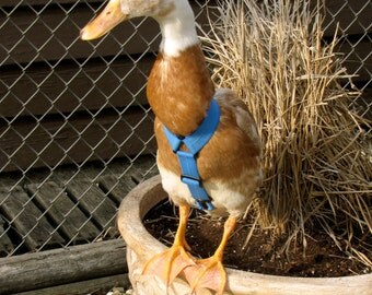 1 Strap Style Walking Harness for pet Ducks, Chickens, and Geese