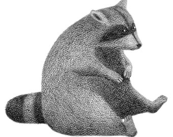 Plump Raccoon - raccoon print - raccoon illustration - 4x6 print