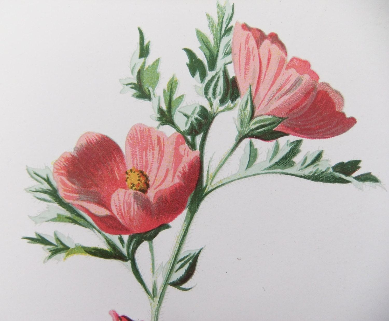 Vintage Flower Drawing 102