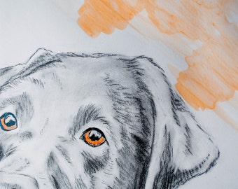Duke the Black Lab, ink, charcoal and watercolour