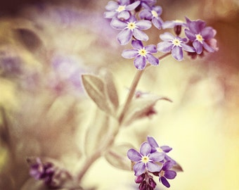 Nature photography, Forget-me-nots, Nostalgic, Flower, Blue, Violet, Vintage, Home Decor.