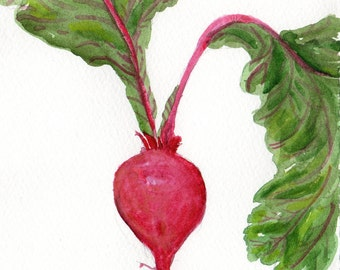 Beet watercolor painting original, vegetable watercolour 5 x 7, beet art, original painting of beets, food art