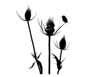 Wildflower Bird Black White Silhouette Art Print Minimalist Nature Flower Photography