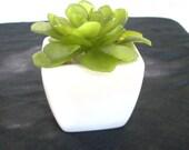Miniature Faux Succulent Planter Set, Set of 3 Miniature Artificial Succulent White Planters