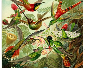 Hummingbirds Poster, Hummingbirds Art Print, Ernst Haeckel Birds Illustration, Natural History Art, Bird Art, Educational Art, Wall Art