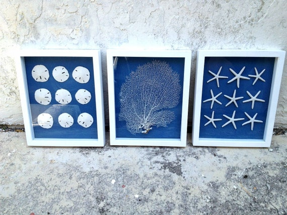 Sale Set Of 3 Framed Sand Dollarseafan And Starfish
