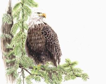 Bald Eagle, original watercolor painting, 8x10, art, bird paintings, home decor, home & living, earthspalette