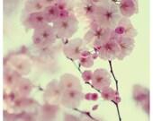 Flower Photograph - Nature Photography - Pink - Mademoiselle -  Spring - Cherry Blossom - Bloom - Fine Art Photograph - Oversized Art - Bock