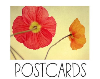 Postcards - Single Card - Blank Cards - Les Jolies Fleurs- Water - Flower Photograph - Poppies - Spring Art - Stationary - Postcard Set