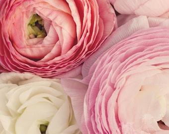 Fine Art Photograph, Pink, Red, Cream, Ranunculus Art, Flower Photo, Blooms, Shabby Chic, Springtime, Romantic, Home Decor, Square 8x8 Print