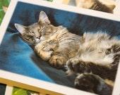 Feline Friends Note Cards - Set of 4 Photographs - Pet, Cat Stationery