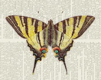 butterfly swallowtail II print