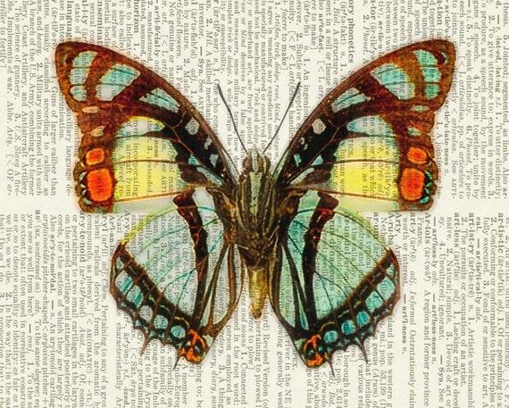 Butterfly orange, aqua, yellow print
