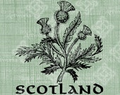 Digital Download Scottish Thistle, digi stamp, digis, digital stamp, Antique Illustration, Icon of Scotland