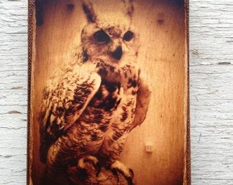 Wall Art - Owl 1 -photo portrait   small wall art 4x6