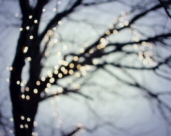 Winter tree with sparkly lights against an indigo blue night sky 8x10 11x14 20x24 print large wall art  'Twinkle'