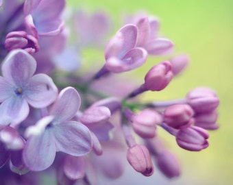 Botanical photography print purple green lilac flowers wall art - Flowerful