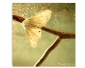 White Moth Photograph Moth Print...White Moth Affordable Art Decor Natural Art Nature Lover Woodland Scene Forest Scene Lepidoptera