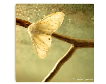 White Moth Photograph Moth Print...White Moth Affordable Art Decor Natural Art Nature Lover Woodland Scene Forest Scene Lepidoptera