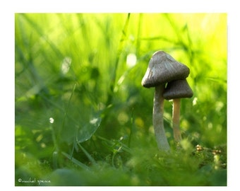 Mushroom Photograph Mushroom Print...Affordable Home Photography Prints Nature Photography Decor Nature Lover Woodland Scene