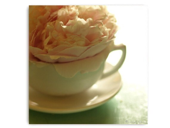 Pink Peonies in White Cup Photograph Botany Flower Print Fine Art Natural History Beautiful Nature