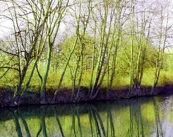 The Spring Pond