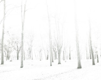 Nature photography, winter photography, snow white, white wedding, falling snow, bare trees, snowy forest, tree photograph