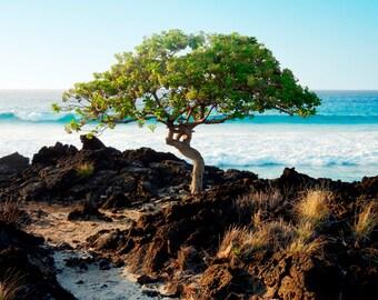 Fine Art Photography Canvas Giclee - Nature Photography - Tree By The Sea Kona Hawaii - Landscape Photography Big Island Hawaii Art