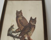 Old Framed Audubon Print Book Plate of Great Horned Owls