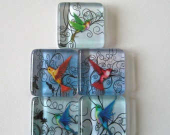 Pretty Hummingbird Square Glass Magnets Set of 5