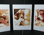 Basset Hounds set of three Art Card Collection