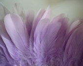VOGUE GOOSE FEATHER  /  Powder Wisteria Purple / 813
