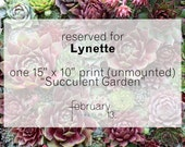 """RESERVED FOR Lynette: Succulent Garden, 15"""" x 10"""" photo, print only (unmounted)"""
