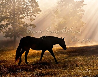Solitude,Photograph of Horse Silhouetted by Rays of Light at Sunrise