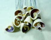 Seashell Stems - Seashell Cowrie Curls - 12 Natural Ivory and Purple Cowrie Shell Halves for Bouquets  - Silver Wire