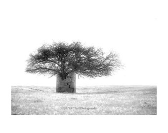 Wellspring Fine Art Photography Black and White Minimal Tree Stone Prairie Magical Landscape of Dreams and Possibilities Home Decor