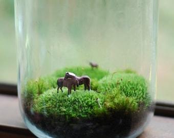 terrarium, lovely horses large moss terrarium