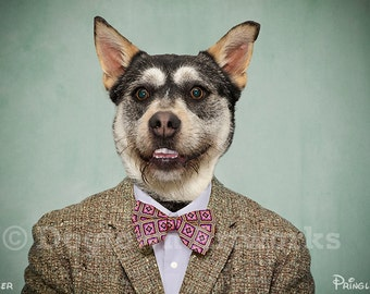 Smiler, large original photograph of a happy Australian cattle dog wearing a vintage tweed jacket and bow tie