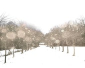 Snowy road trees snowflakes white winter monochrome minimalist pale pastel beige cream nature bokeh - Winter Storm 8 x 10