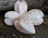 Rita's Crystal Loaded Healing Heart Chakra Seashell Shaker - Heal a Broken Heart, Clear Negative Luv Cycles