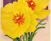 HUNNEMANNIA! (Tulip Poppy) Vintage Flower Seed Packet Tuckers Seed House Lithograph (Carthage, Missouri)
