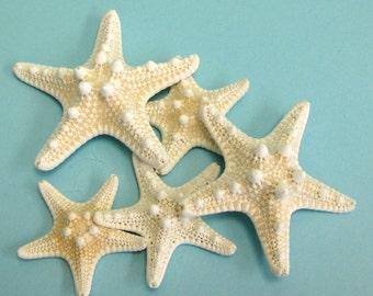 """5 Knobby Starfish -  4"""" - 4.5"""""""