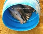 Fine Art Digital Photograph-- Sleeping Aardvark  5x7