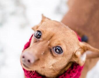 Mini Puppy Circle Scarf / Pet Scarf