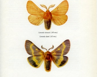 Vintage Moth Print, Autumn Silkworm Moth (105) Prochazka, 1966, Butterfly, Lepidoptera, Natural History, Frameable Art