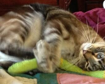 FREE SHIPPING High Quality organic Catnip/Valerian Cat Toy SNAKE by Catopia9, hand-crochet, wool/bamboo yarn.