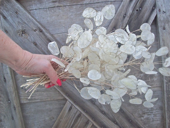 Silver Dollar Plant Flower Bunch Dry Arrangement By